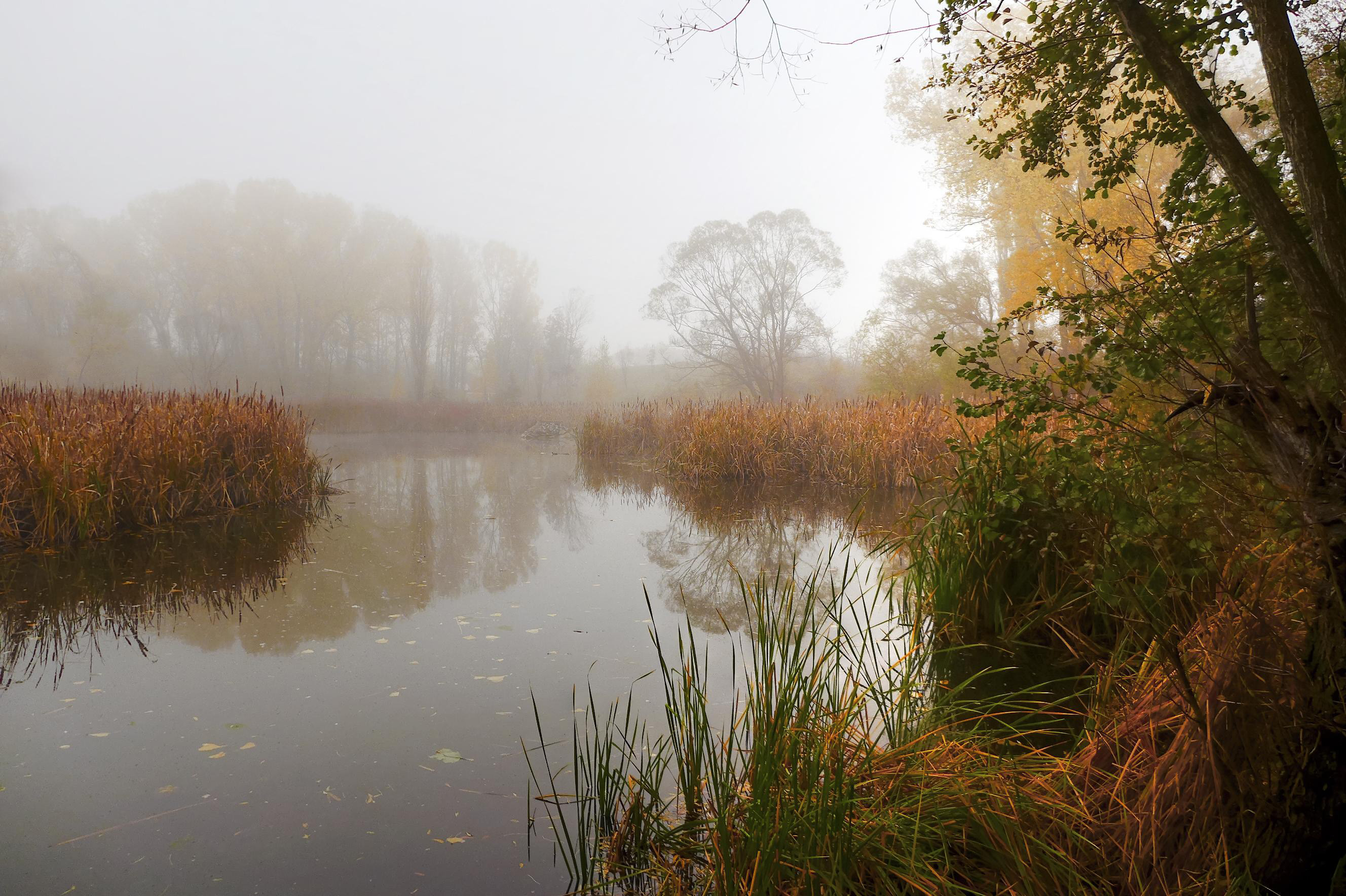 Pond shrouded in fog during the fall